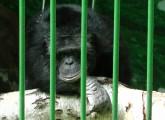 Mehrheit der Deutschen gegen exotische Tiere in Zoos