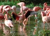 Vögel in deutschen Zoos: für Schauzwecke verstümmelt