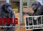 Auffangstation statt Qualhaltung: Schimpansen aus dem Tierpark Nadermann gerettet