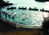 Das Abschlachten der Delfine im japanischen Taiji geht weiter