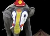 Bundesratsinitiative für ein Wildtierverbot in Zirkussen