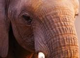 Scharfe Kritik an Schweriner Elefanten-Oper