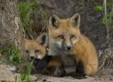 animal public begrüßt Bundesratsbeschluss zum Wildtierverbot im Zirkus