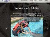 Delfine aus deutschen Zoos in Vergnügungspark abgeschoben