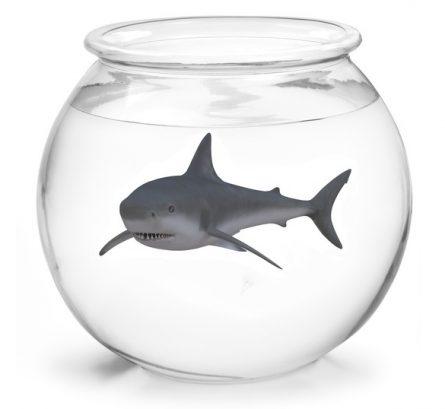 Kein Hai-Gefängnis in Pfungstadt