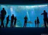 Hai-Aquarium in Pfungstadt: Tierschützer wollen beschleunigtes Bauverfahren verhindern