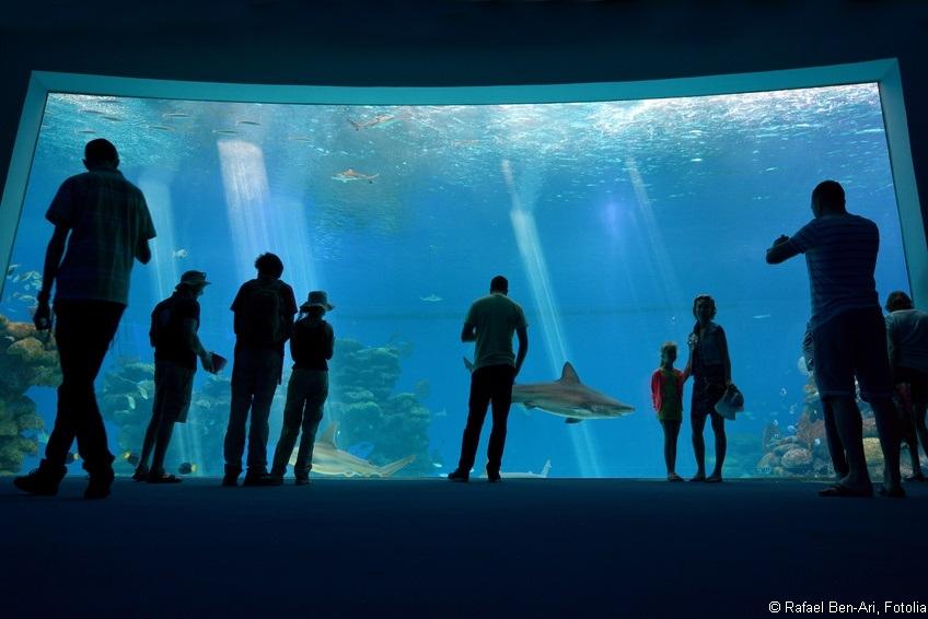 Kein Hai-Gefängnis in Sinsheim