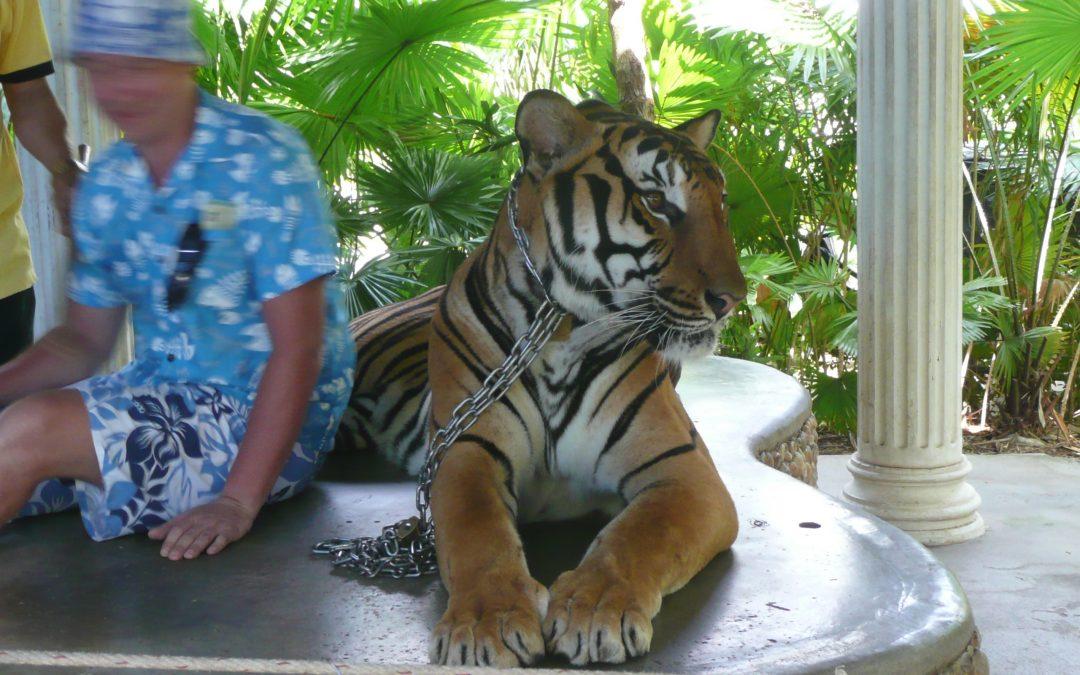 Fototourismus: So leiden Tiere für Urlaubs-Selfies