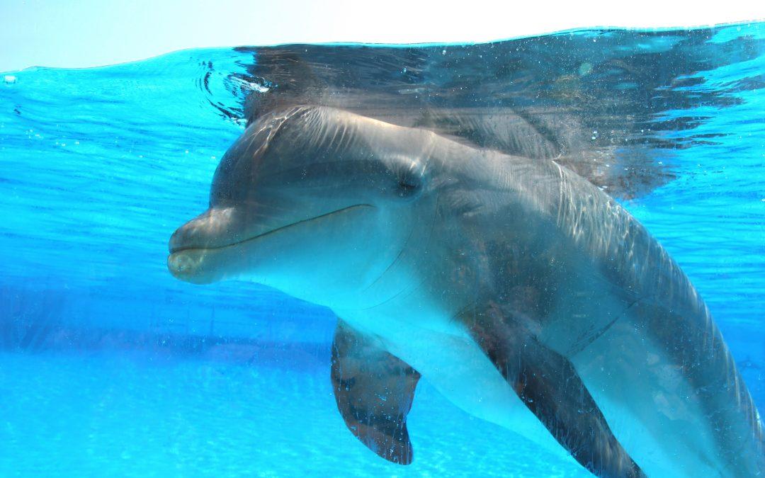 Schwimmen mit Delfinen – Die ganze Wahrheit