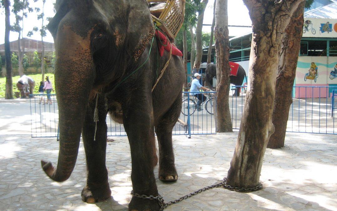 Elefantentourismus: Kein Freizeitspaß, sondern Tierquälerei!