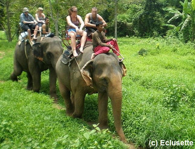 Achtung Lebensgefahr – Unfälle mit Elefanten