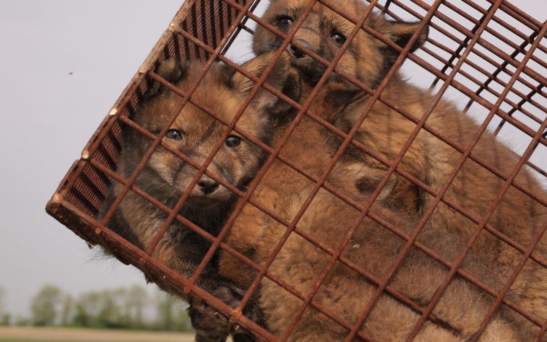 NRW-Regierung will Jagdgesetz verschlechtern
