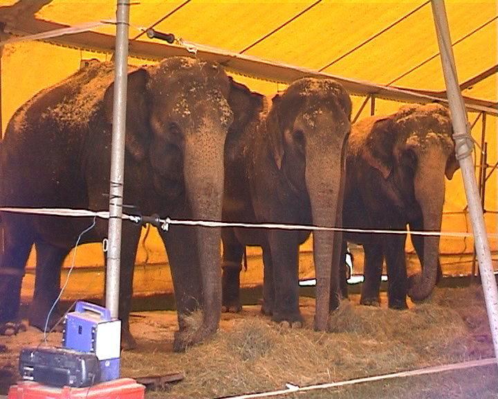 Neues Konzept für Wildtiere im Zirkus: Geheime Verhandlungen zwischen Zirkusbranche und Ministerium für Ernährung und Landwirtschaft