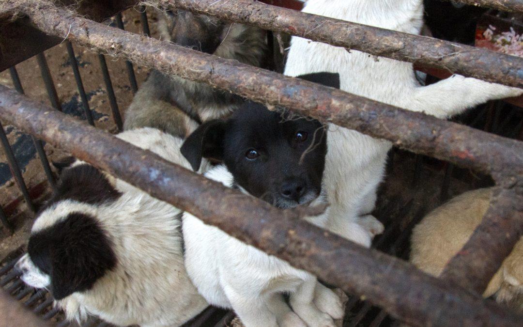 Lebendtiermärkte – Hölle auf Erden für Tiere, weltweite Bedrohung unserer Gesundheit