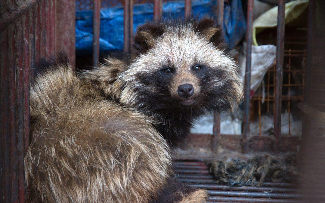 Aus der Corona-Pandemie lernen – Internationalen Wildtierhandel stoppen