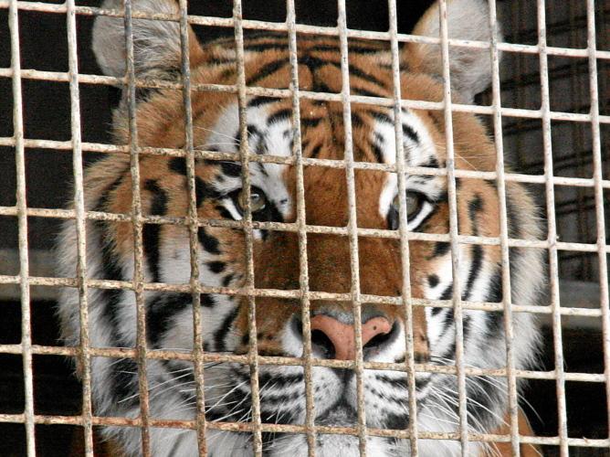 Tierschützer fordern Verbot für alle Wildtiere in Zirkussen