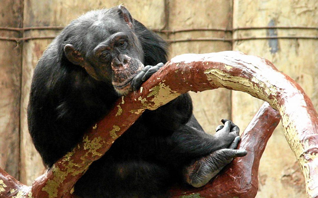 Tierschutzwidrige Haltung im Krefelder Zoo muss beendet werden