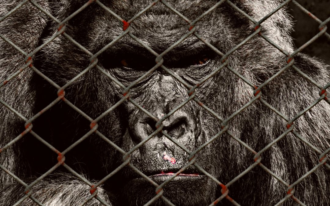 Elf Tier- und Naturschutzverbände kritisieren Affenhaus-Neubaupläne des Krefelder Zoos in gemeinsamer Stellungnahme scharf