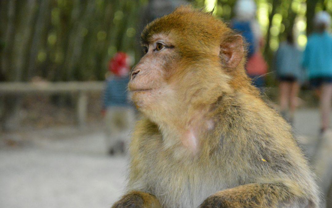 animal public kritisiert geplanten Affenpark in Frielendorf